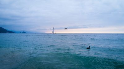 Brown Pelicans escort a sailboat on the Pacific.