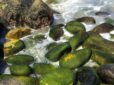 Algae covered rocks are bathed with sea water from the Pacific ocean on the Mexican coast.