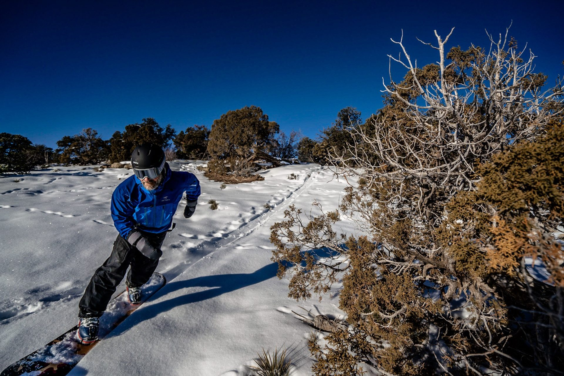 In hardboots on a snowboard carving through small juniper trees in the desert near Grand Junction, Colorado